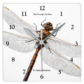 Relógio Quadrado Close up de uma libélula de Canadá Darner