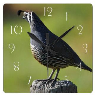 Relógio Quadrado Codorniz californianas