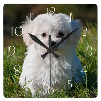 Relógio Quadrado Filhote de cachorro maltês