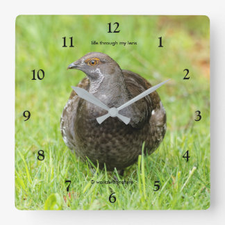 Relógio Quadrado Galo silvestre Sooty bonito na grama