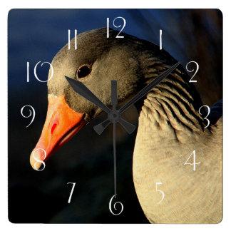 Relógio Quadrado Ganso de pato bravo europeu bonito