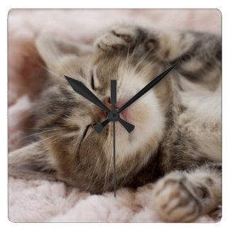 Relógio Quadrado Gatinho sonolento