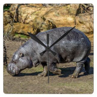 Relógio Quadrado Hipopótamo do pigmeu no pulso de disparo de parede