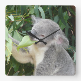 Relógio Quadrado Koala que come a folha da goma