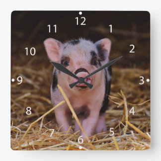 Relógio Quadrado mini porco