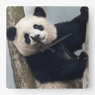 Relógio Quadrado Panda nova que escala uma árvore, China