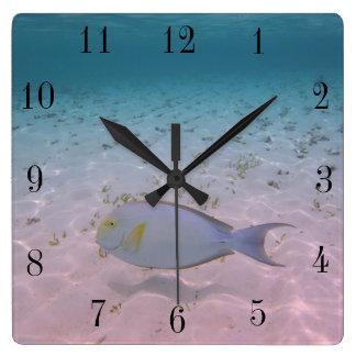 Relógio Quadrado Peixes tropicais do coral do mar de turquesa da