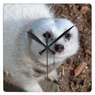 Relógio Quadrado Pele branca Meerkat da neve,
