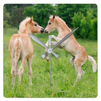 Relógio Quadrado Potros bonitos dos cavalos de Haflinger que elevam