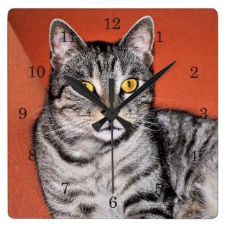 Relógio Quadrado Retrato cinzento bonito do gato