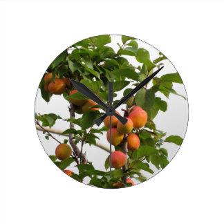 Relógio Redondo Abricós maduros que penduram na árvore. Toscânia,