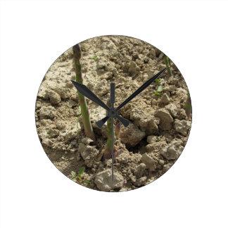 Relógio Redondo Aspargo verde novo que sprouting da terra