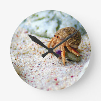 Relógio Redondo Caranguejo da areia, Curaçau, ilhas das Caraíbas,