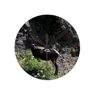 Relógio Redondo Carneiros de Bighorn da montanha rochosa, ovelha