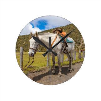 Relógio Redondo Cavalo branco amarrado acima no parque nacional de