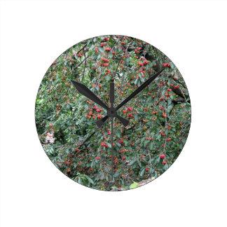 Relógio Redondo Cerejas vermelhas na árvore no pomar de cereja