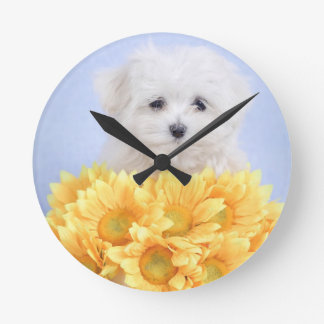 Relógio Redondo Filhote de cachorro maltês