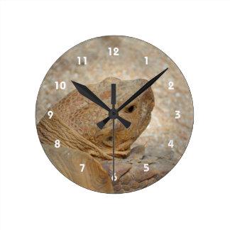 Relógio Redondo fim da cabeça da tartaruga acima da tartaruga