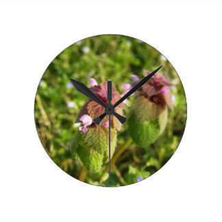 Relógio Redondo Morto-provocação roxa (purpureum do Lamium) no