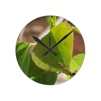 Relógio Redondo orvalho da manhã na folha chinesa do sebo