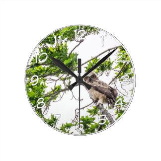 Relógio Redondo Owlet em um ramo de árvore do bordo