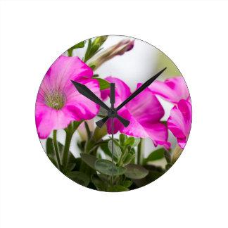 Relógio Redondo Paixão cor-de-rosa do petúnia