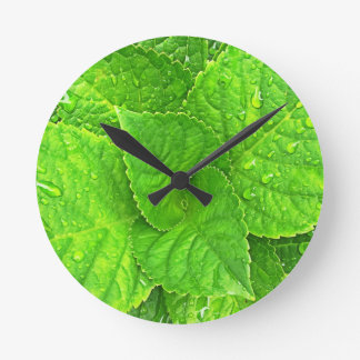 Relógio Redondo Para o amor da natureza