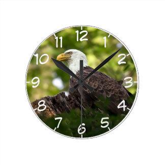 Relógio Redondo Parada do resto da águia americana