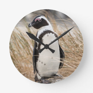 Relógio Redondo Pinguim africano na praia