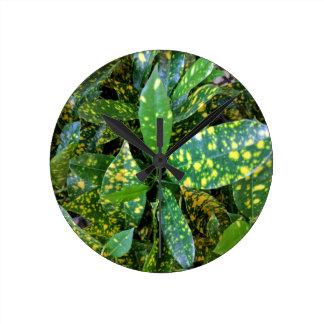 Relógio Redondo Planta do Croton