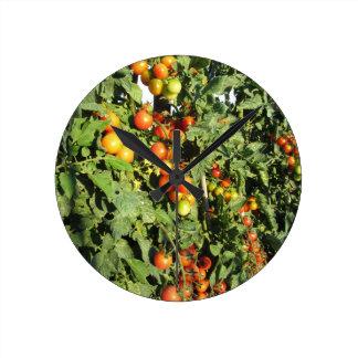 Relógio Redondo Plantas de tomate que crescem no jardim