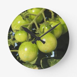 Relógio Redondo Tomates verdes que penduram na planta no jardim