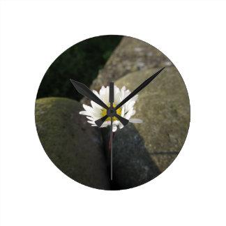 Relógio Redondo Única flor da margarida branca entre as pedras