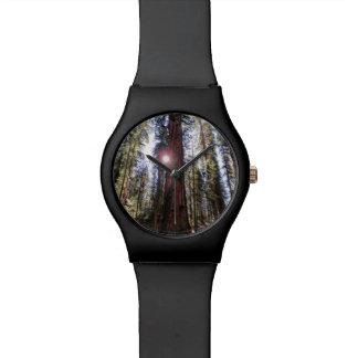Relógio Sunlit da floresta