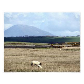 Relógios de Croagh Patrick sobre o rebanho Impressão De Foto