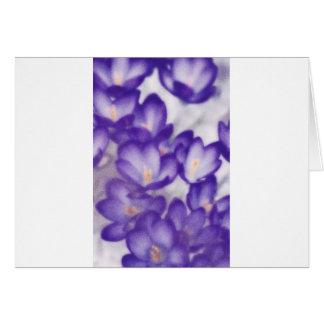 Remendo da flor do açafrão da lavanda cartão