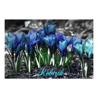 Renascimento de flores azuis do açafrão do Aqua Impressão De Foto