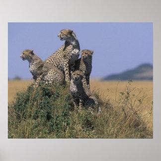 Reserva do jogo de África, Kenya, Mara do Masai, a Pôster