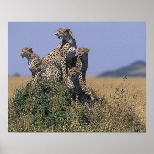 Reserva do jogo de África, Kenya, Mara do Masai, a Impressão