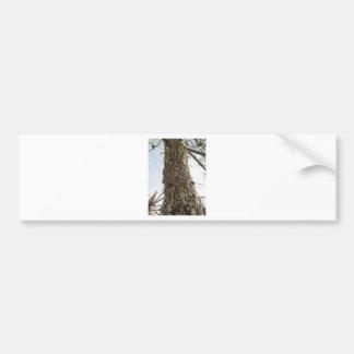Resina do pinheiro no tronco adesivo de para-choque