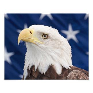 Retrato da águia americana com estrelas impressão de foto