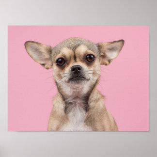 Retrato da chihuahua no poster cor-de-rosa
