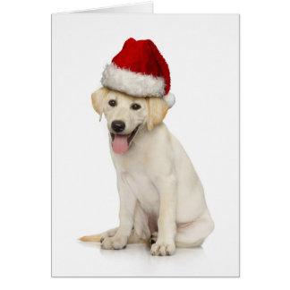 Retrato de labrador retriever branco cartão comemorativo