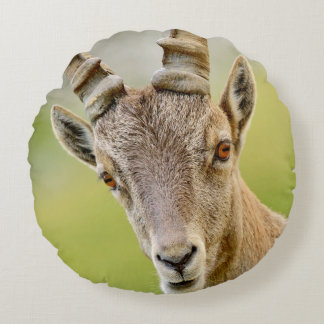 Retrato de um íbex almofada redonda