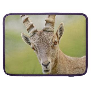 Retrato de um íbex bolsas para MacBook