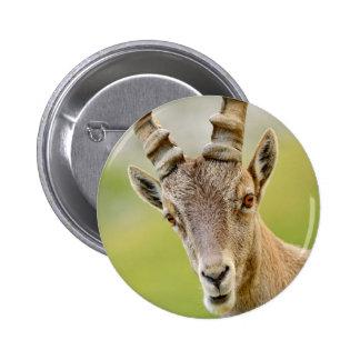 Retrato de um íbex bóton redondo 5.08cm