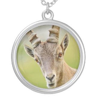 Retrato de um íbex colar banhado a prata