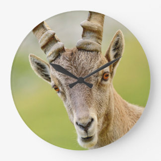 Retrato de um íbex relógio para parede