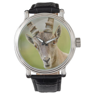 Retrato de um íbex relógios de pulso