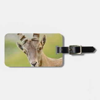 Retrato de um íbex tag de mala